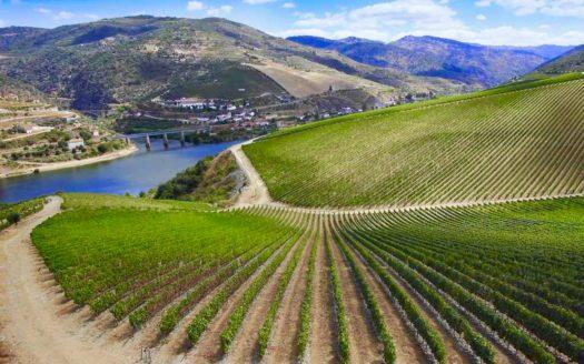 A modern winery in Spain!