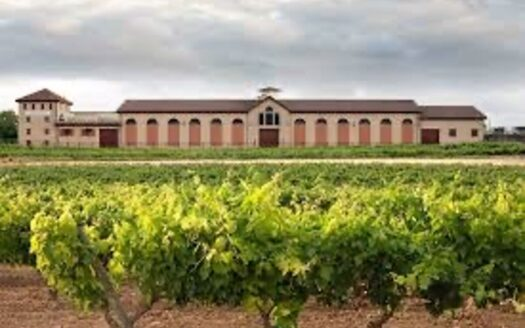 Winery (Bodega) and vineyards in Spain